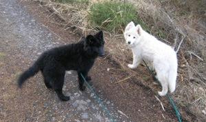 Sunny a Cheynee na procházce