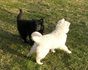 Sunny a Cheynee na zahradě