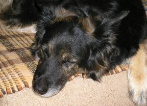 Sandy na kanapi