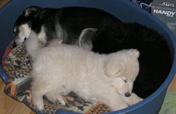 Kulíšek, Sunny a Cheynee v pelíšku