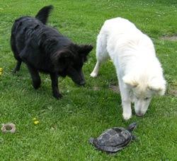S želvičkou
