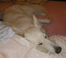 Sunny v posteli