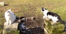 Kočičí hry