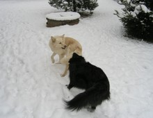 Hraní ve sněhu