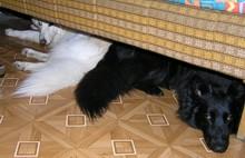 Holky pod kanapem